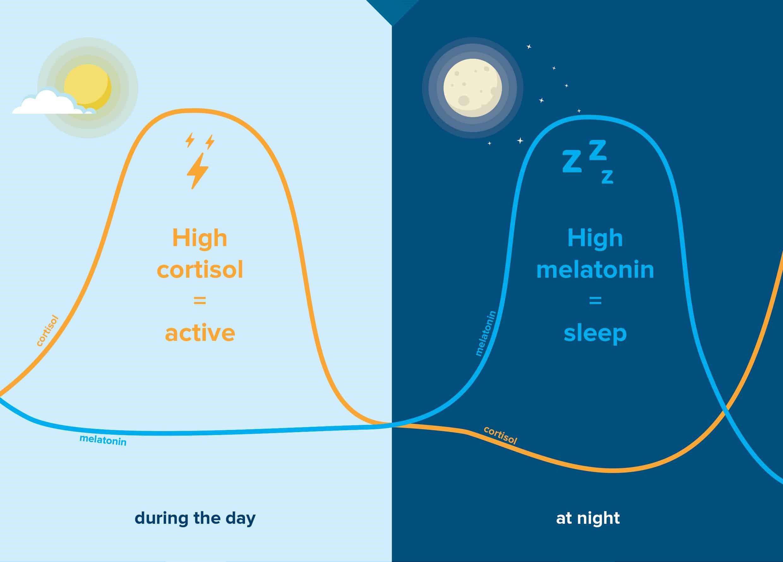 Lighting & Wellness - Effect of Lighting on Your Body Rhythm